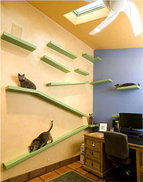 家有萌宠 猫奴家居的正确打开方式
